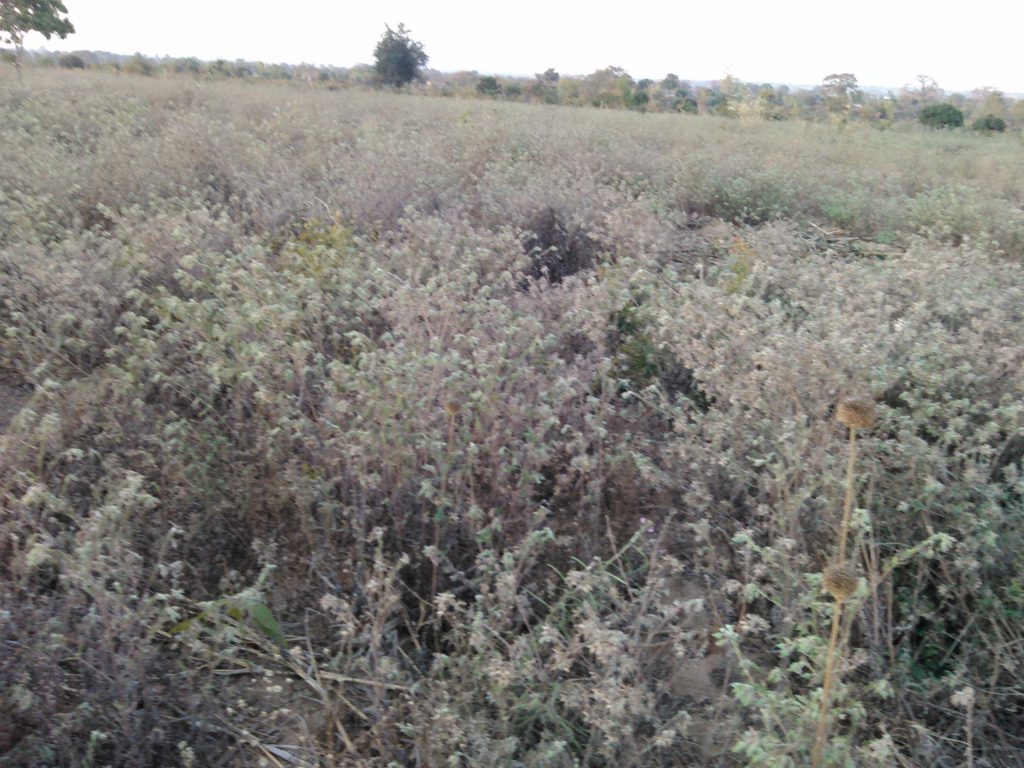 Uncleared land with grasses and bushes